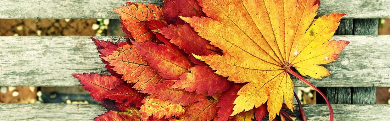 Színes levelek - színes programok